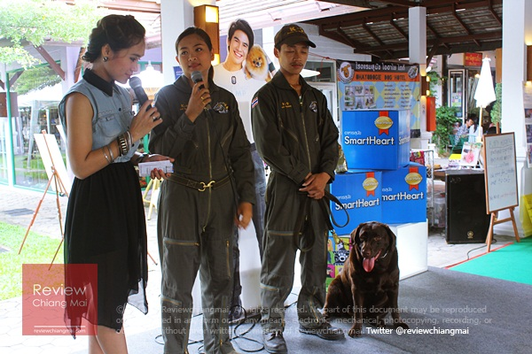 Welcome dog festival
